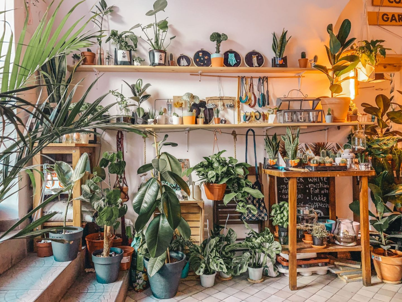 Krakau Café Pflanzen